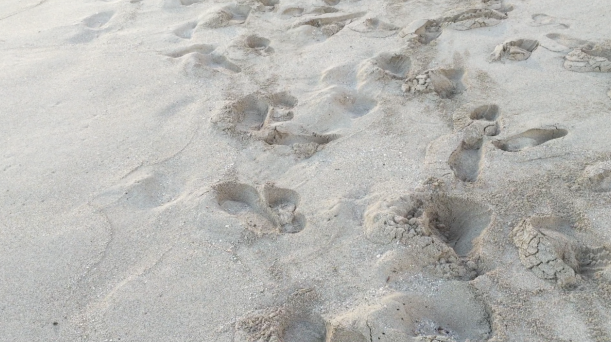 "Mich's Monday Mantra ""Make Your Footprints In The Sand"""