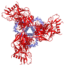 """Scripps Research Scientists get Glimpse of """"Teenage"""" HIV Neutralizing Antibody"""
