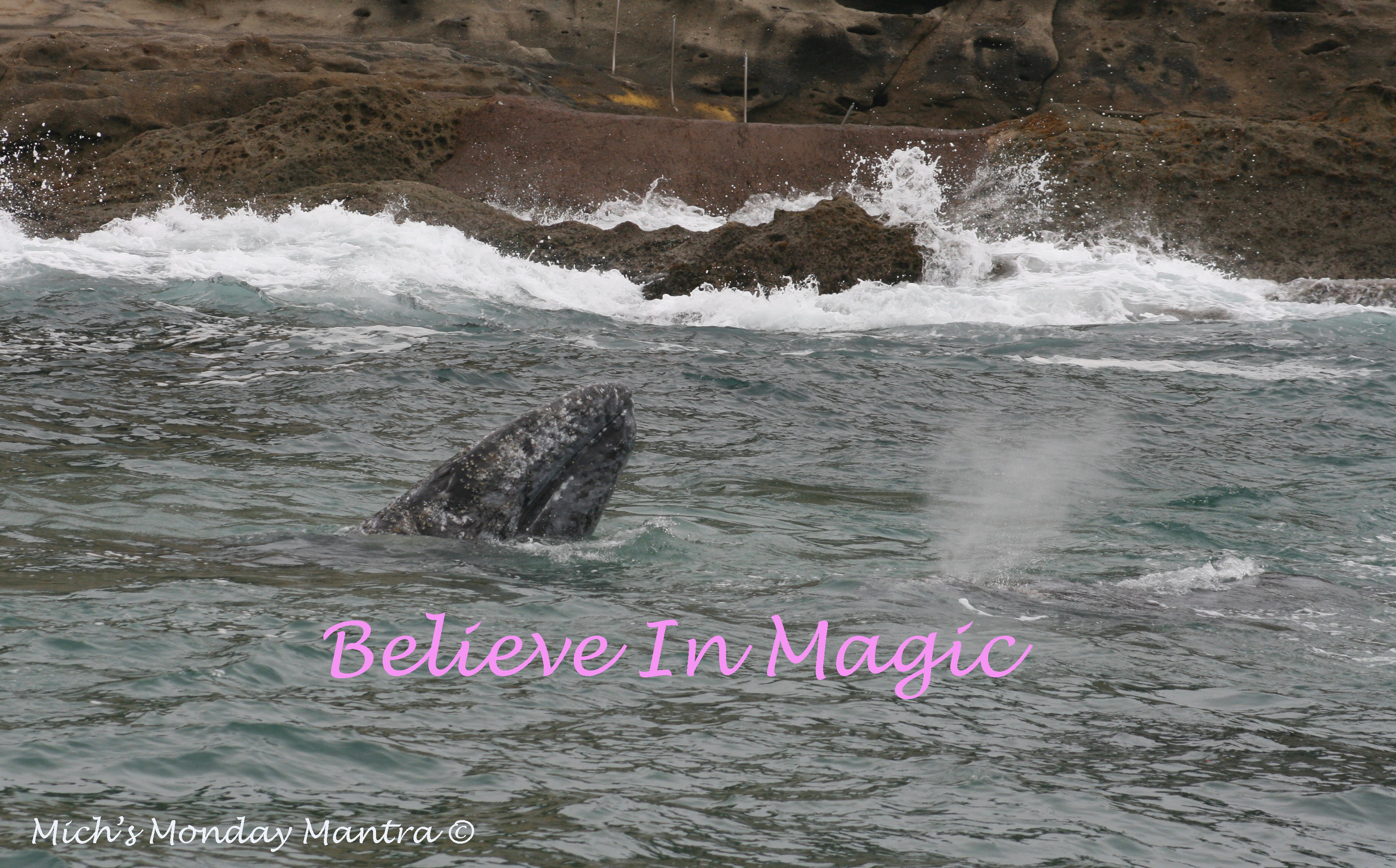 Believe In Magic- Mich's Monday Mantra For The New Year