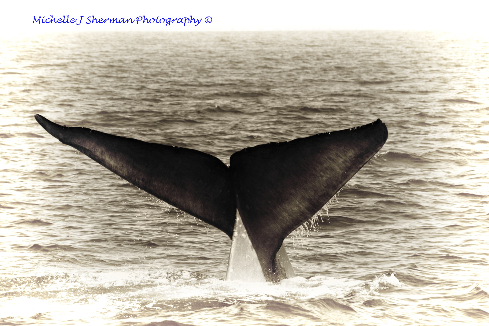 "Foto Friday ""Whale Tale"""