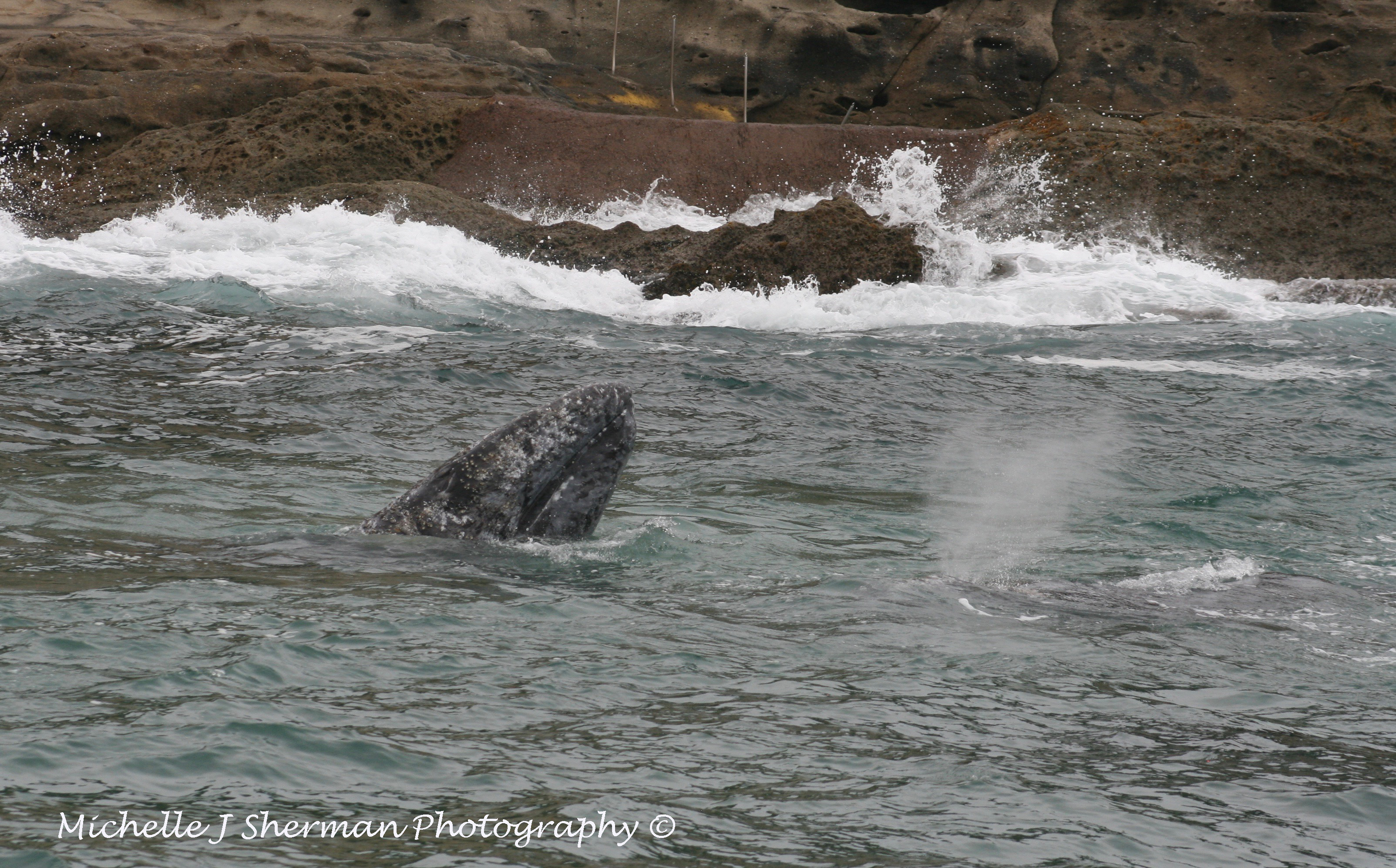 Sealions, Seals & Whales Oh My- Mich's Monday Mantra
