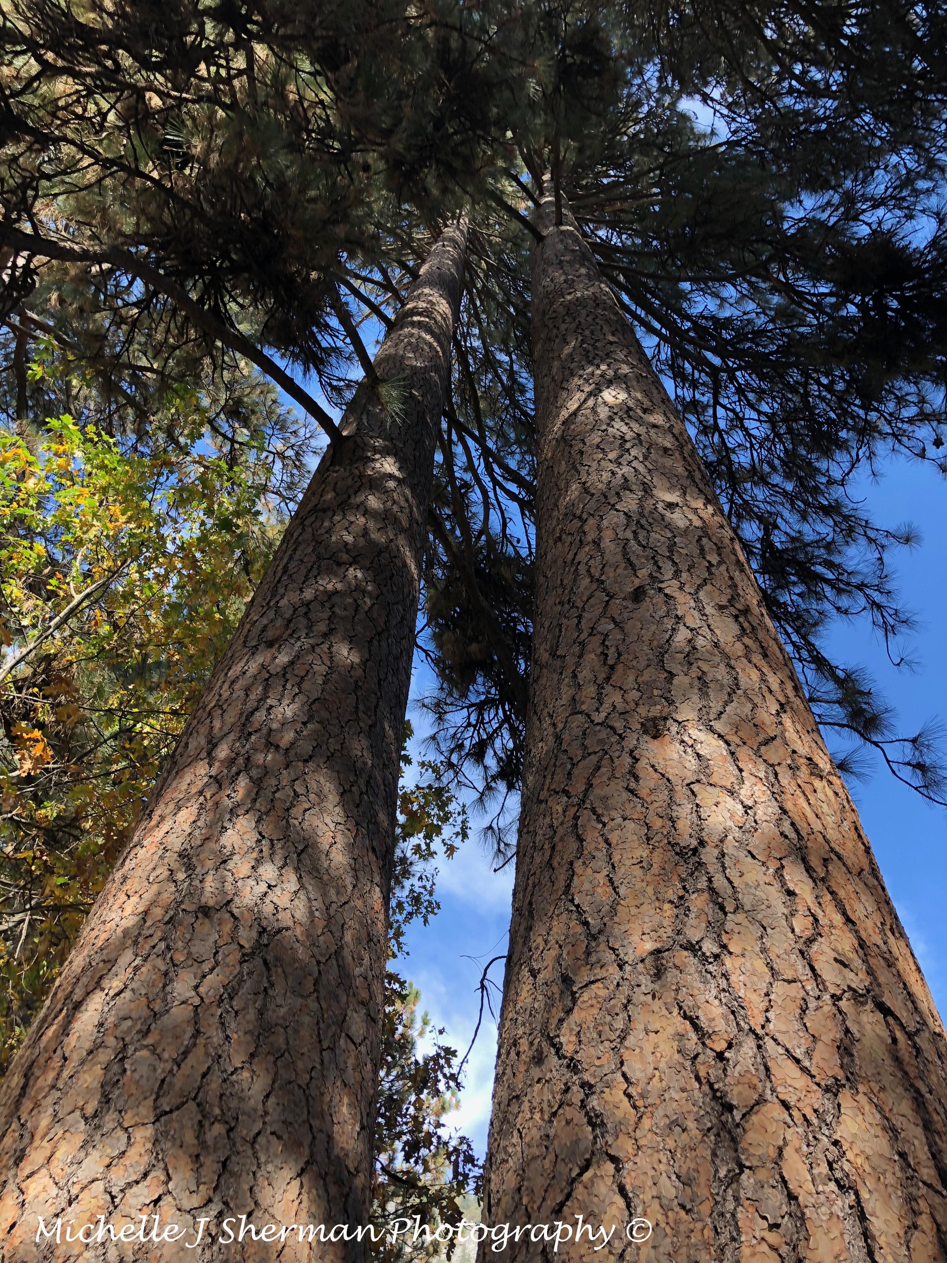Foto Friday- Redwood Majesty